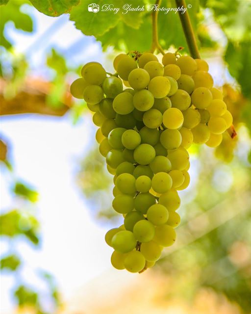 What about some grapes for monday morning!!👌👌 foodpron foodpics ...