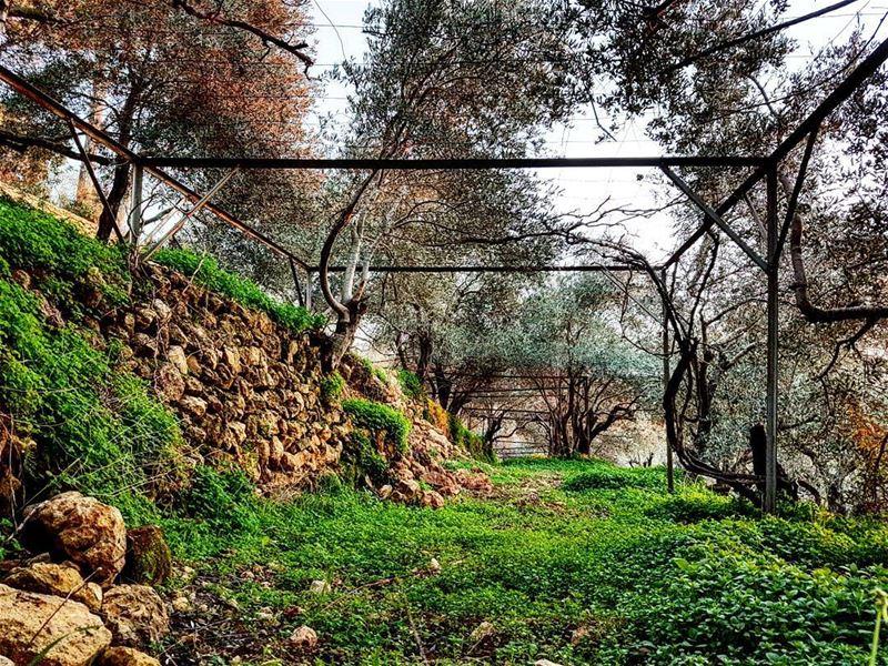 Bed of grass. instalebanon livelovelebanon chouf greenisthecolor love... (Deïr El Qamar, Mont-Liban, Lebanon)