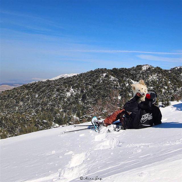 """🐕""""قيس"""" snowday snowshoeing barouk ainzhalta cedars nature dog ... (Ain Zhalta - Bmohray Cedars)"""