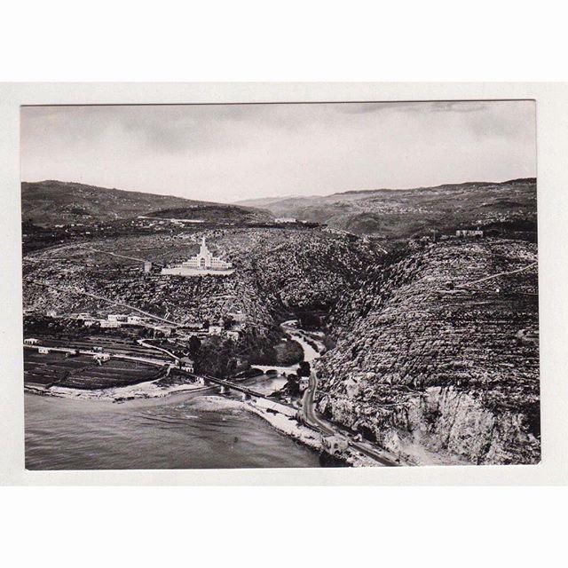 نهر الكلب عام ١٩٥٤،