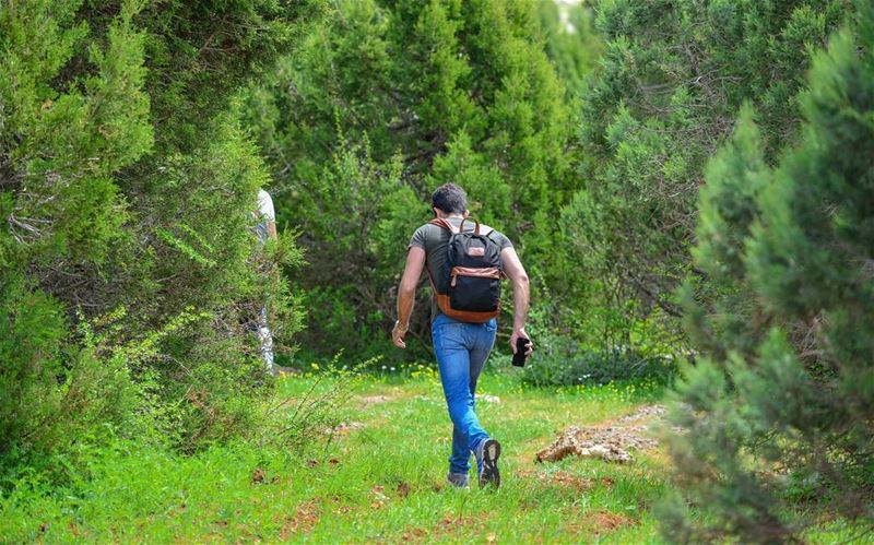 In every walk with nature one receives far more than he seeks🌳🍃🌿🍀🌱... (`Akkar, Liban-Nord, Lebanon)
