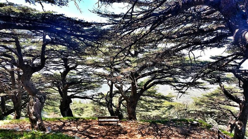 The clearest way into the Universe is through a forest wilderness.🌲🌲🌲🌲� (Arz el Chouf)