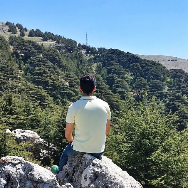Eyes on the forest🌲🌲🌲🌲🌲,not on the tree🌲 everyonedeservesohat... (Arz el Chouf)