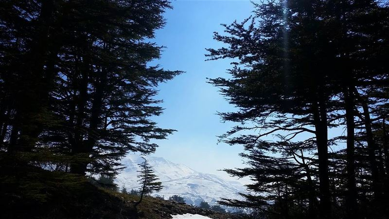The clearest way into the Universe is through a forest wilderness.🌳🌳🌳🌳� (Arz Tannourine)
