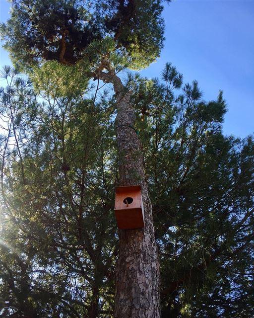 """""""L'oiseau choisit l'arbre sur lequel il veut se reposer mais l'arbre peut -"""