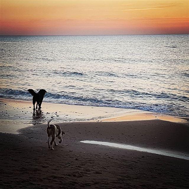 Kids playing on the beach at sunset tourleb tourlebanon lebanoninsta ... (Byblos)
