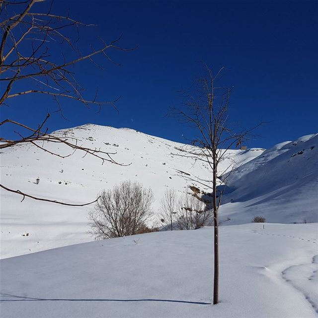 A sunny day at the mountain ☃ goodmorning  snowing  landscape ... (Faraya, Mont-Liban, Lebanon)