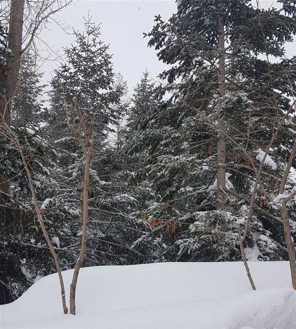 Freezing⛆🌪 goodmorning snowing landscape landscapephotography neige ... (Faraya, Mont-Liban, Lebanon)