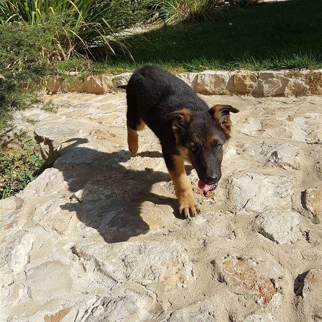 Sooooo cute🐕🐶.. nature dog dogs animals automne autumn mountains ...
