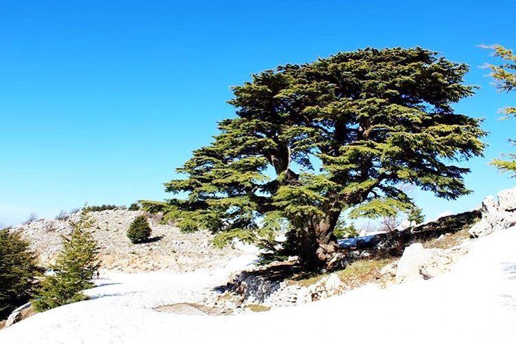 Beautiful day lebanon lebanon_hdr ig_lebanon insta_lebanon ... (Barouk Cedar Forest)