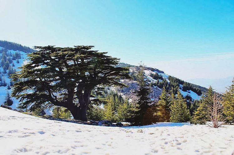 Heaven on earth lebanon lebanon_hdr ig_lebanon insta_lebanon ... (Barouk Cedar Forest)