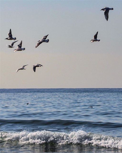 Let's go outside lebanon lebanon_hdr ig_lebanon insta_lebanon ... (Ramlet Al Bayda Public Beach)