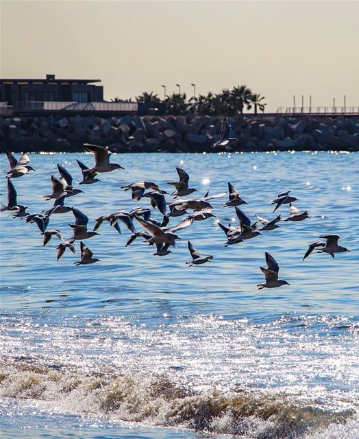 Have a calm Friday Igers.. lebanon lebanon_hdr ig_lebanon ... (Ramlet Al Bayda Public Beach)