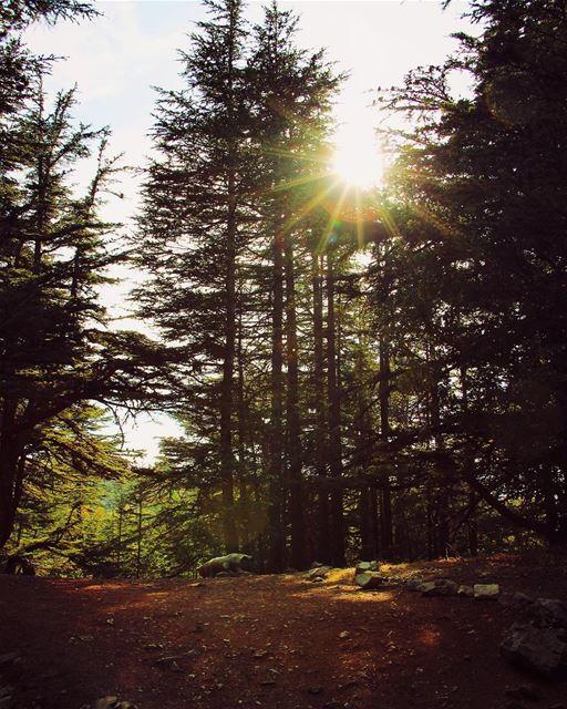 Shine lebanon lebanon_hdr ig_lebanon insta_lebanon wearelebanon ... (Barouk Cedar Forest)