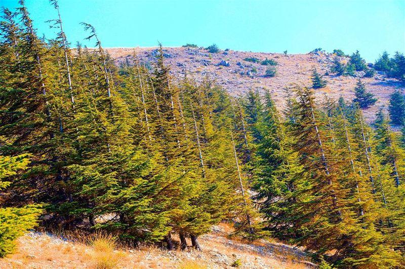 Nature lebanon lebanon_hdr ig_lebanon insta_lebanon wearelebanon ... (Chouf)