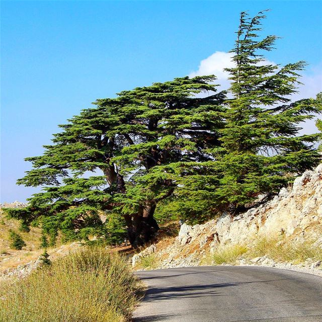 Weekend is here ... Mountain or beach :) lebanon lebanon_hdr ig_lebanon... (Barouk Cedar Forest)