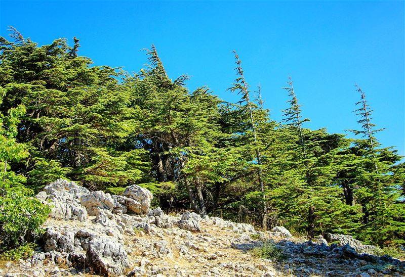 Our nature.. lebanon lebanon_hdr ig_lebanon insta_lebanon ... (Barouk - Shouf)