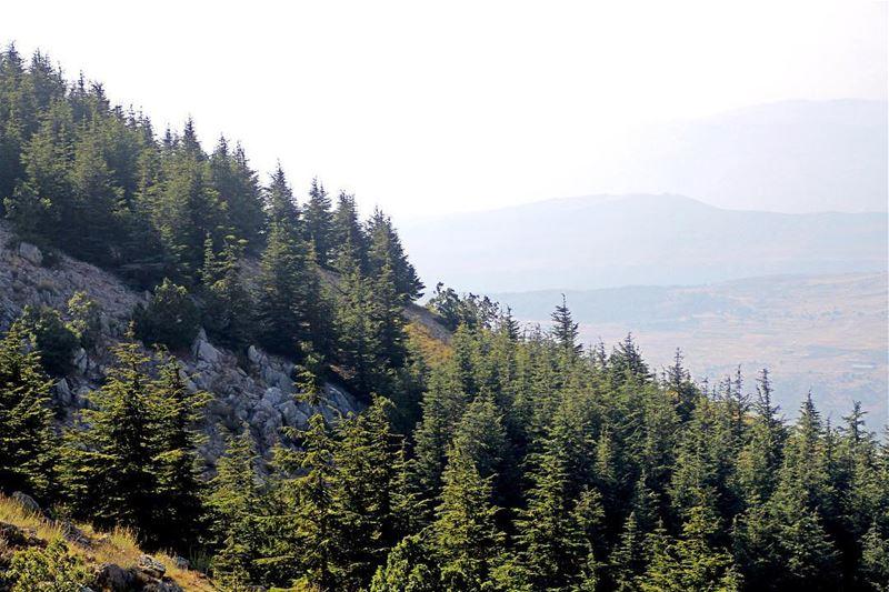 😍 lebanon lebanon_hdr ig_lebanon insta_lebanon wearelebanon ... (Barouk Cedar Forest)