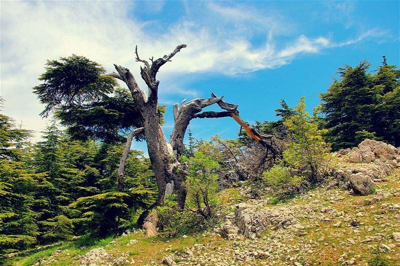 Live love barouk livelovebarouk lebanon lebanon_hdr ig_lebanon ... (Barouk Cedar Forest)