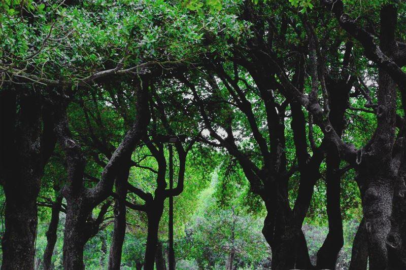 In da forest... lebanon lebanon_hdr ig_lebanon insta_lebanon ... (Annâya, Mont-Liban, Lebanon)