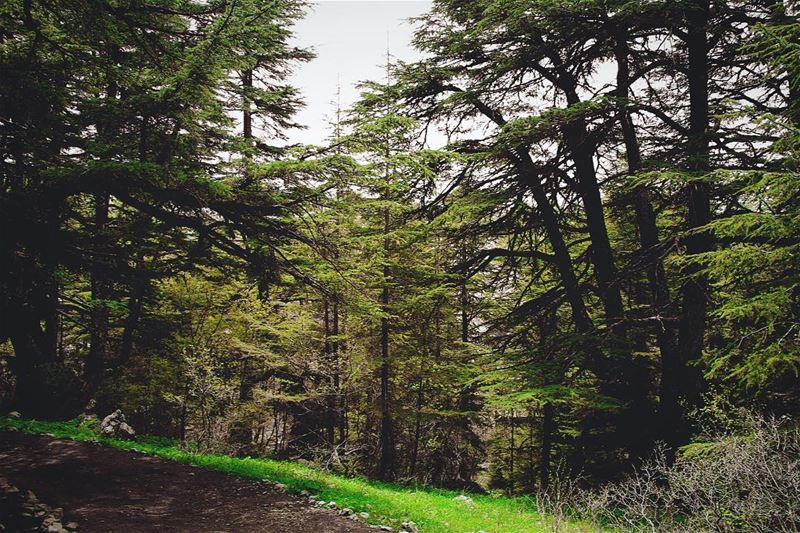 All i need is this... lebanon lebanon_hdr ig_lebanon insta_lebanon ... (Barouk Cedar Forest)
