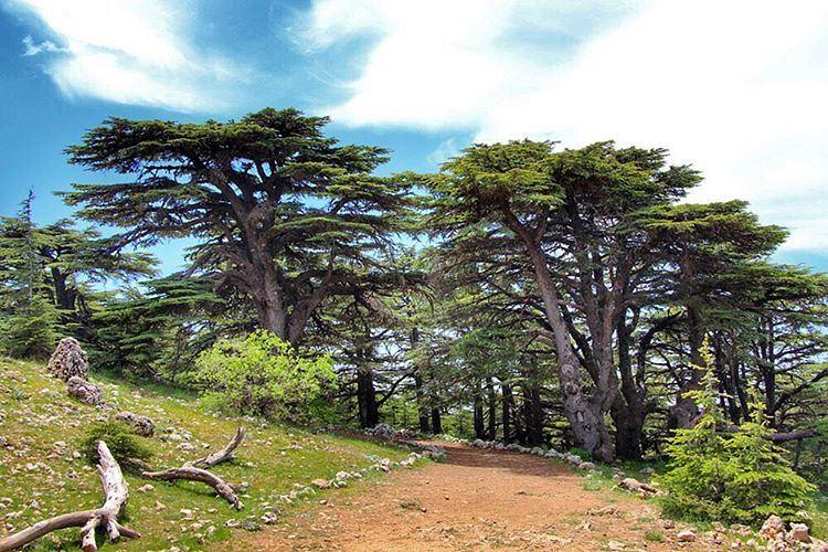 Barouk cedars... lebanon lebanon_hdr ig_lebanon insta_lebanon ...