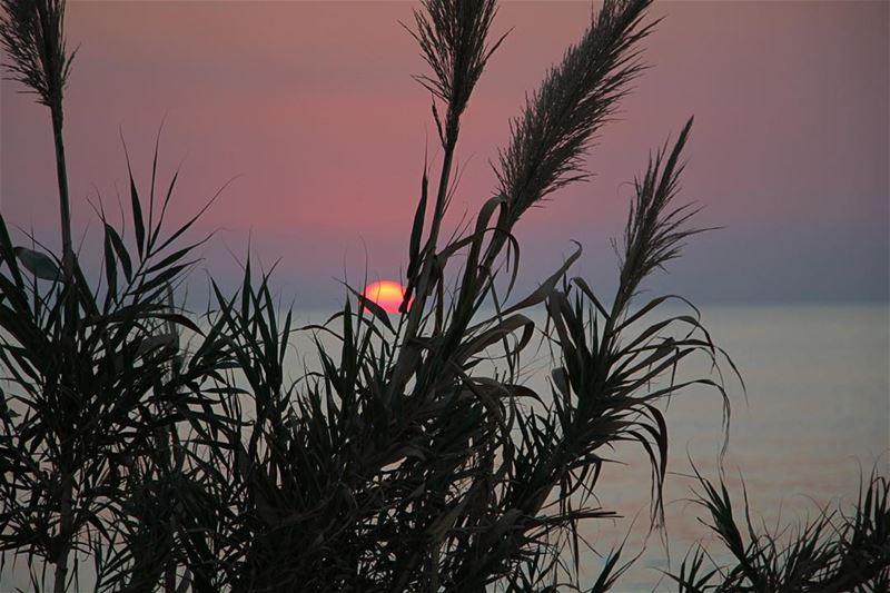 One of my sunsets... lebanon lebanon_hdr ig_lebanon insta_lebanon ...