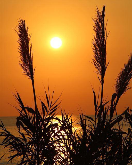 One of my sunsets lebanon lebanon_hdr ig_lebanon insta_lebanon ... (Utopia)