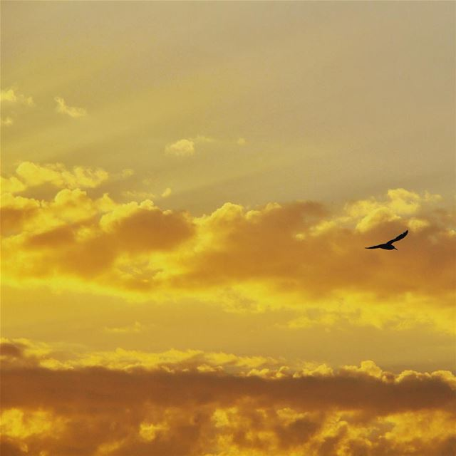 This sunset...🇱🇧 lebanon lebanon_hdr ig_lebanon insta_lebanon ...
