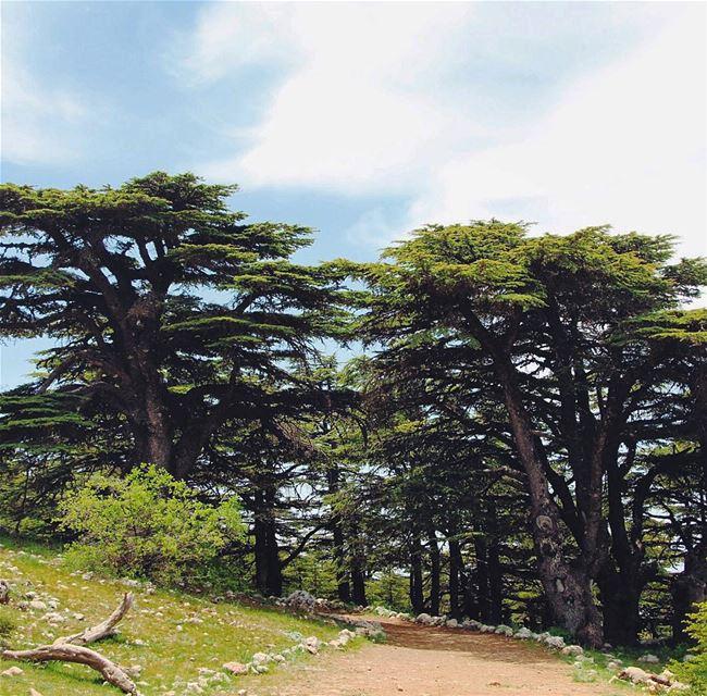 Have a great week Igers... 🇱🇧 lebanon lebanon_hdr ig_lebanon ... (Barouk Cedar Forest)