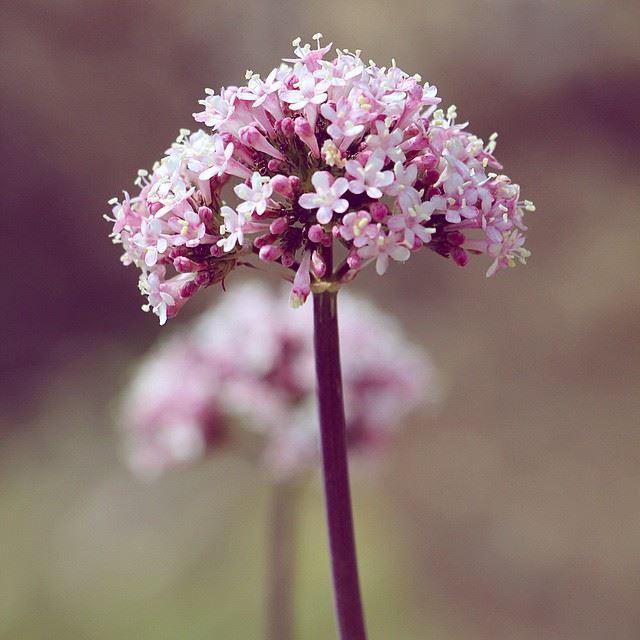 spring flowers lebanon liveloveleb wearelebanon proudlylebanese ... (Barouk Cedar Forest)