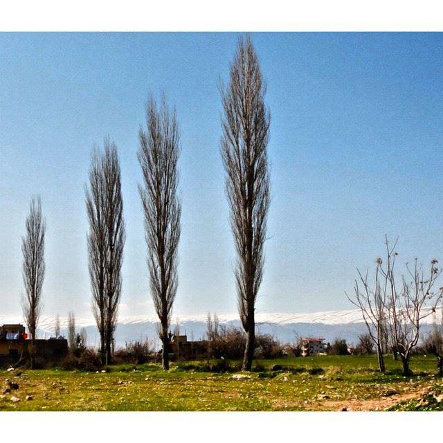 InstaSize bekaa lebanon baalbeck nature trees wearelebanon ...