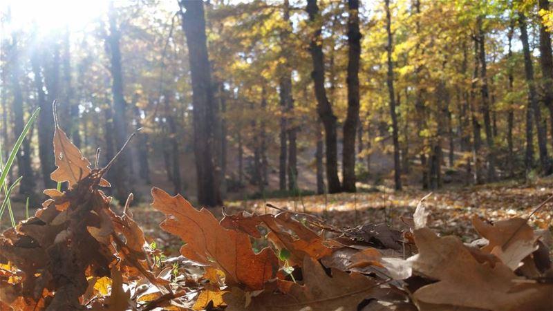 🍃🍁🍂 Hiking ... (غابة العزر-القموعة)