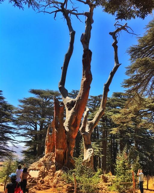 """ Unexpected Intrusions Of Beauty. This Is What Life Is..."" whatsuplebanon... (Cedars of God)"