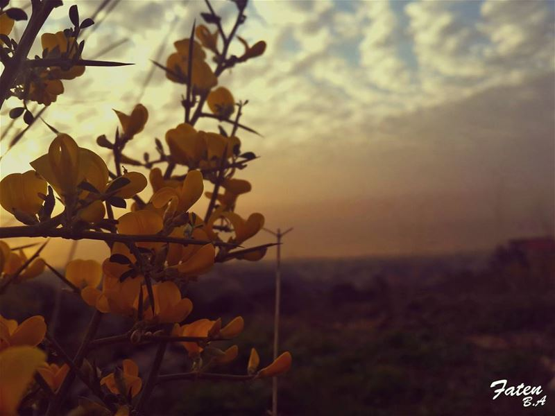 .رحلتي فيكَ جمود... كيف ؟؟ وأنتَ المسافرُ في دمي... (Baisour, Mont-Liban, Lebanon)