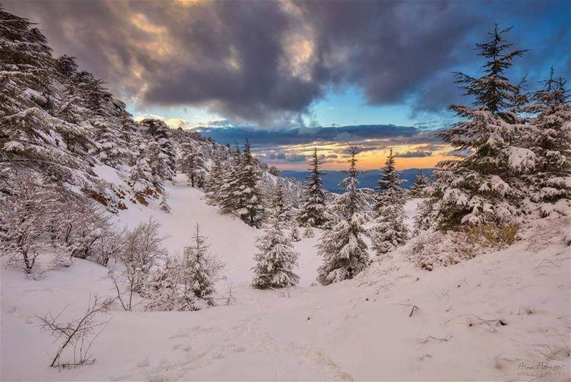 sunset from above lebanon shouf reserve cedar tree snow clouds ... (Ain Zhalta - Bmohray Cedars)