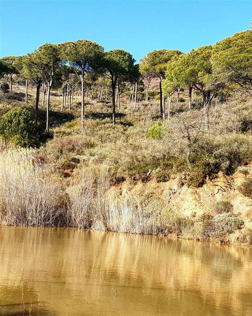 The golden lake. lake love nature trees bluesky pinelandresort ... (Deïr El Harf, Mont-Liban, Lebanon)
