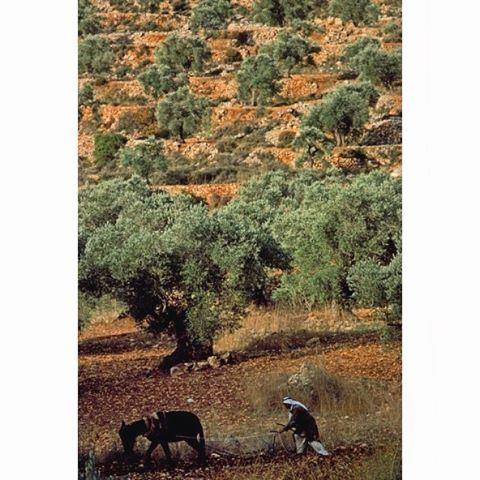 Good morning from Houmine Al Faouqa - South Lebanon - 1968 .