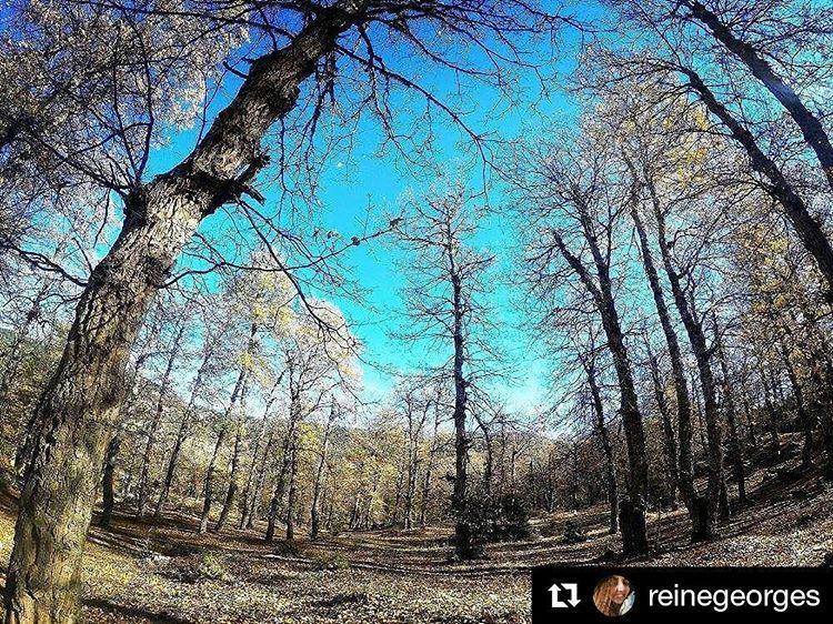 Repost @reinegeorges with @repostappEvery season has its beauty,Can't...
