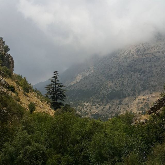Evey photo that has a cedar is beautiful mountains northlebanon ...