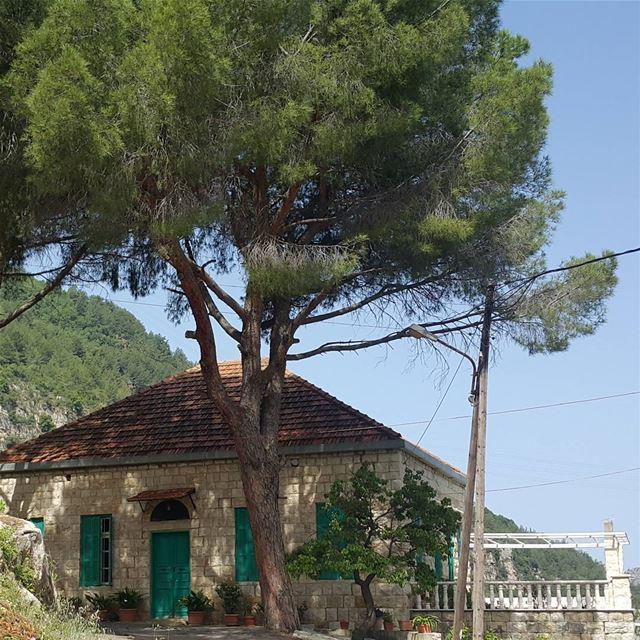 Bel fayyet ... intheshadow pinetree yahshoush lebanon ...