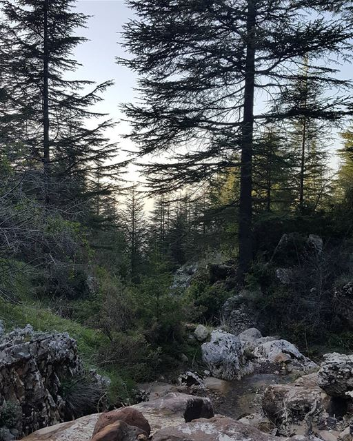 It feels good to be lost in the right direction naturelovers lebanon ...