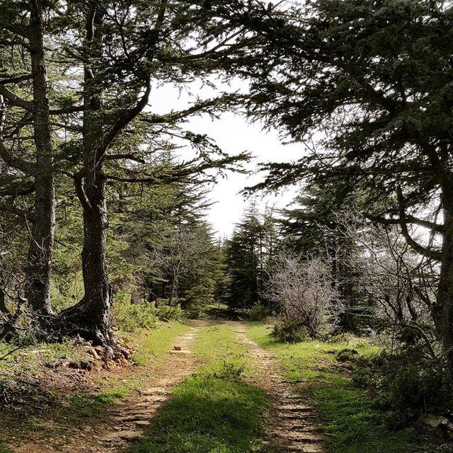 livelovebatroun livelovelebanon cedars forest trailslife ...