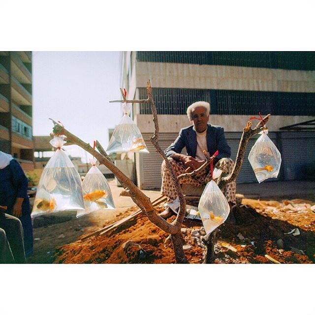 A man sells goldfish in baggies tied to a tree branch in Beirut 1983 .