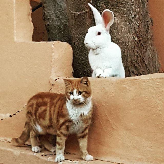 Amazing friendships . Life is full of surprises ! tourleb tourlebanon ... (Batroûn)