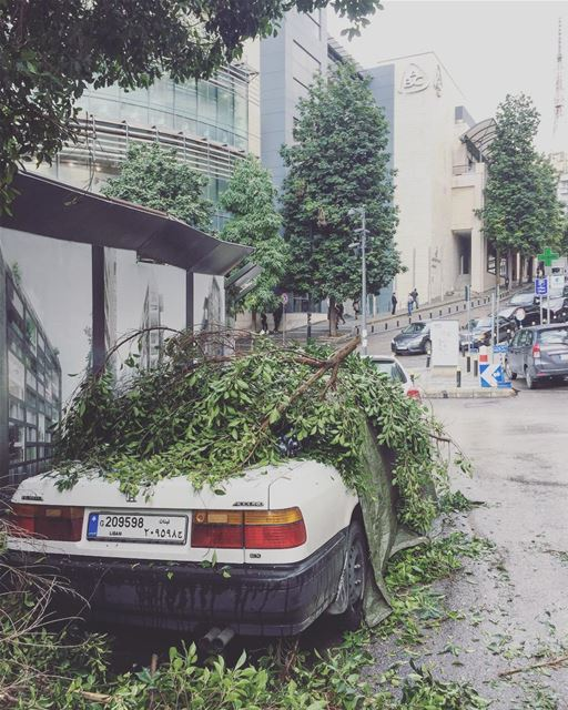 Here it's not about leafs falling off the trees, it's about branches ... (Beirut, Lebanon)