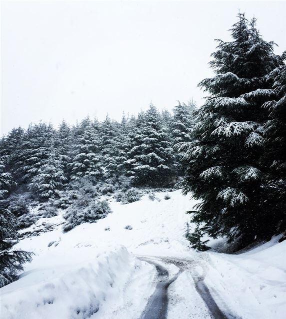 Lebanon beirut livelovelebanon livelovebeirut insta_lebanon ... (Barouk Cedar Forest)