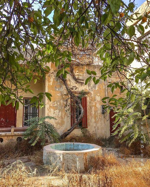 Orange Tree 🍊 Old House, Beirut 🇱🇧.... proudlylebanese ... (Beirut, Lebanon)