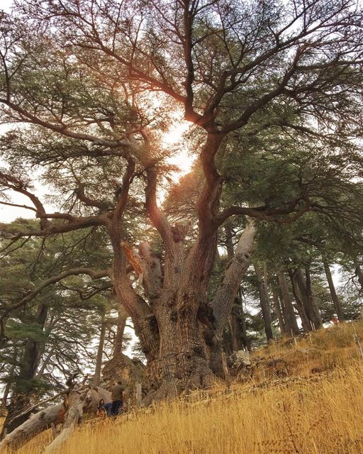www.facebook.com/georgesper ✌🏻️.... proudlylebanese ... (Cedars Of Lebanon)