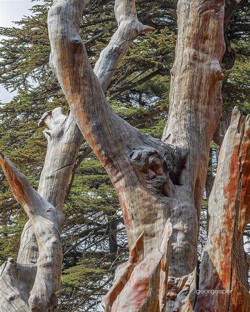 Cedar's Sculpture by Artist @rudyrahme 🇱🇧.... proudlylebanese ... (Cedars Of Lebanon)